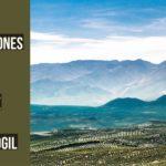 La A-32 continúa con nuevas expropiaciones en Úbeda, Sabiote y Torreperogil